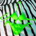 VS maudymukas salotinis neoninis