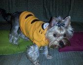 Naujas šuniuko rūbelis orandžinis tigriukas