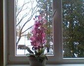 orhidejos
