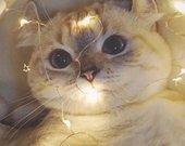 Lemputės fotosesijai