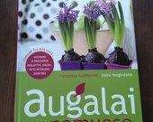 Knyga Augalai namuose