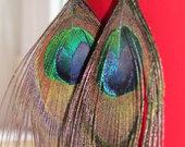 Povo plunksnų auskarai