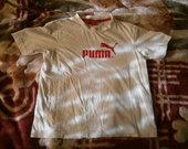 Puma maikute