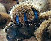 LABAI PIGIAI - silikoniniai nagučiai katėms!!!