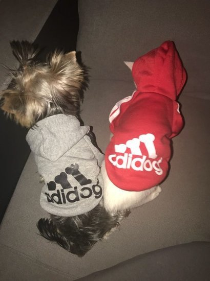 Megztukas šuniukui