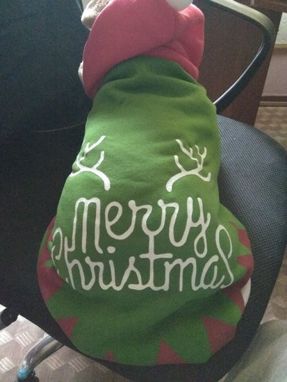 Kalėdinis šuns bliuzonas